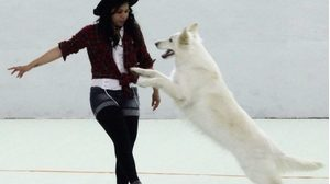 Dog Dancing @ Salle polyvalente