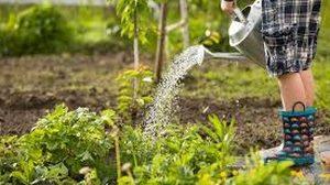 Mise en place des jardins partagés @ Terrain communal