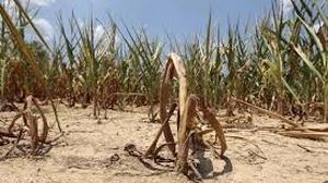 Sécheresse: demande d'indemnisation des agriculteurs jusqu'au 17 avril 2019
